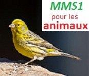 Serin-des-canaries-MMS