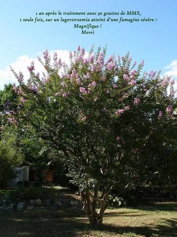 arbre-MMS