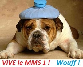 img-mms1-conjonctivite-chien-malade
