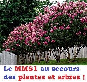 mms1-secours-plantes-arbres-crape-myrtle