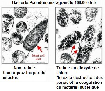 mms_bacterie_explosion
