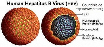 hepatite-C_virus-tunisie