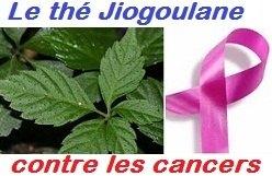 img-jiaogulan-cancer-jeune-feuille