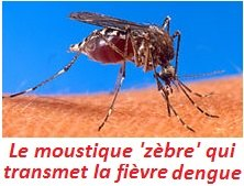 paludisme_MMS_Aedes_aegypti